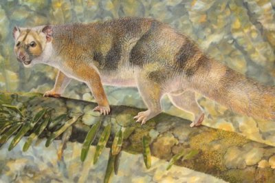 New tiny species of extinct Australian marsupial lion named after Sir David Attenborough